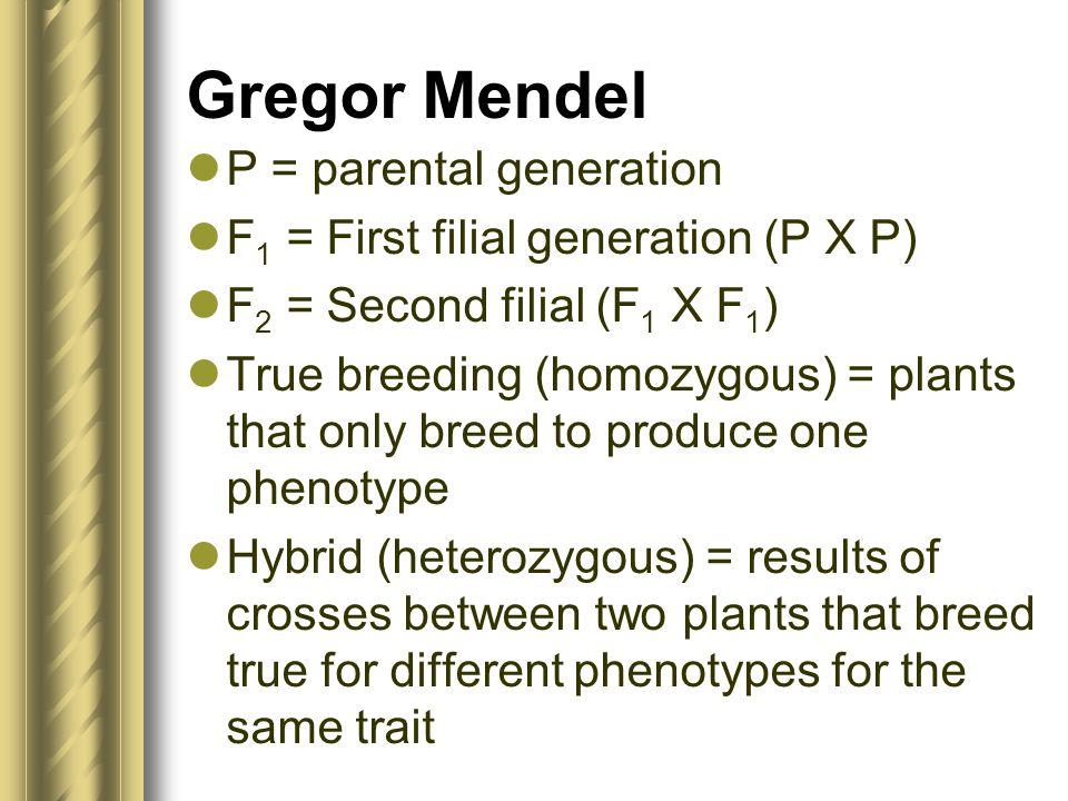 Gregor Mendel P = parental generation F 1 = First filial generation (P X P) F 2 = Second filial (F 1 X F 1 ) True breeding (homozygous) = plants that
