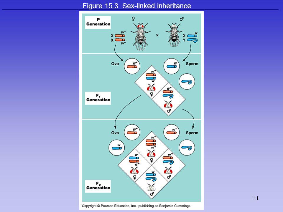 11 Figure 15.3 Sex-linked inheritance