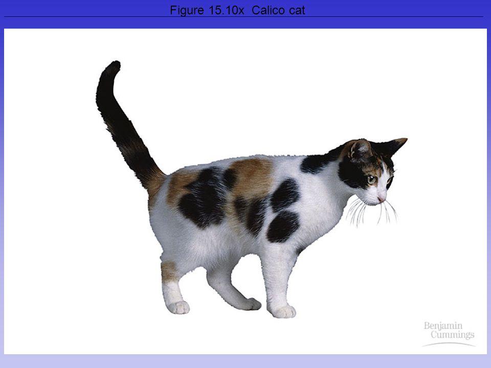 29 Figure 15.10x Calico cat