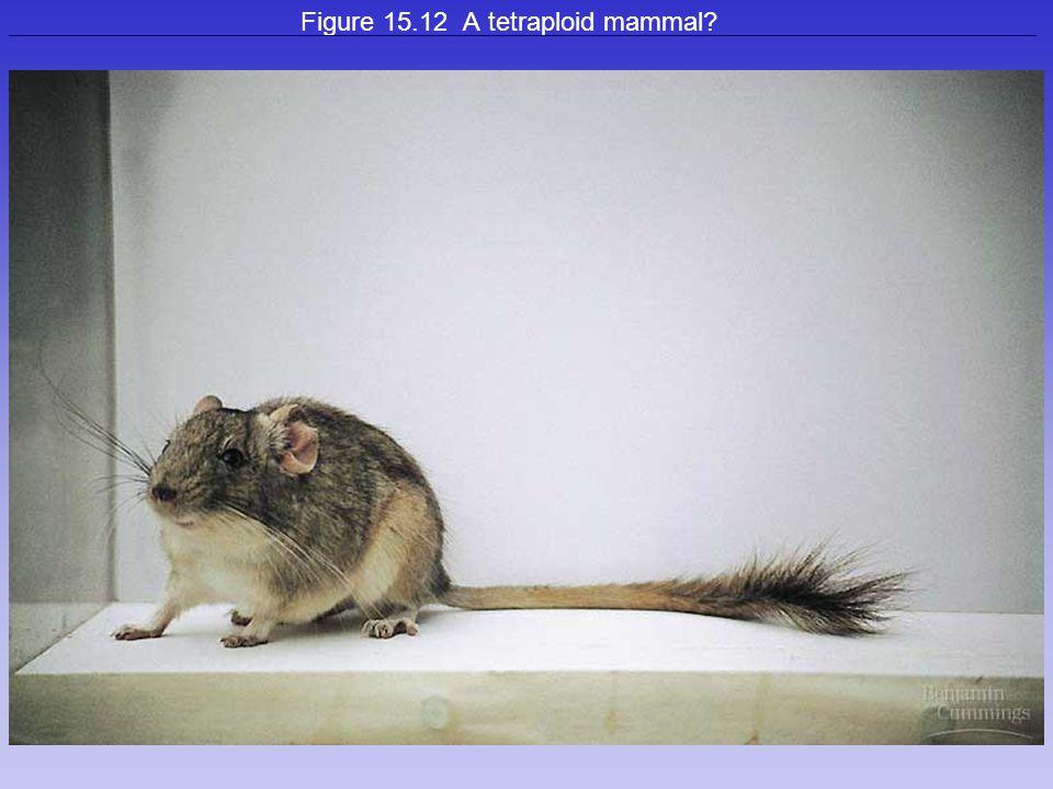 33 Figure 15.12 A tetraploid mammal?
