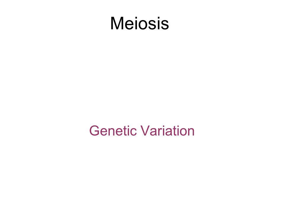 Meiosis Genetic Variation