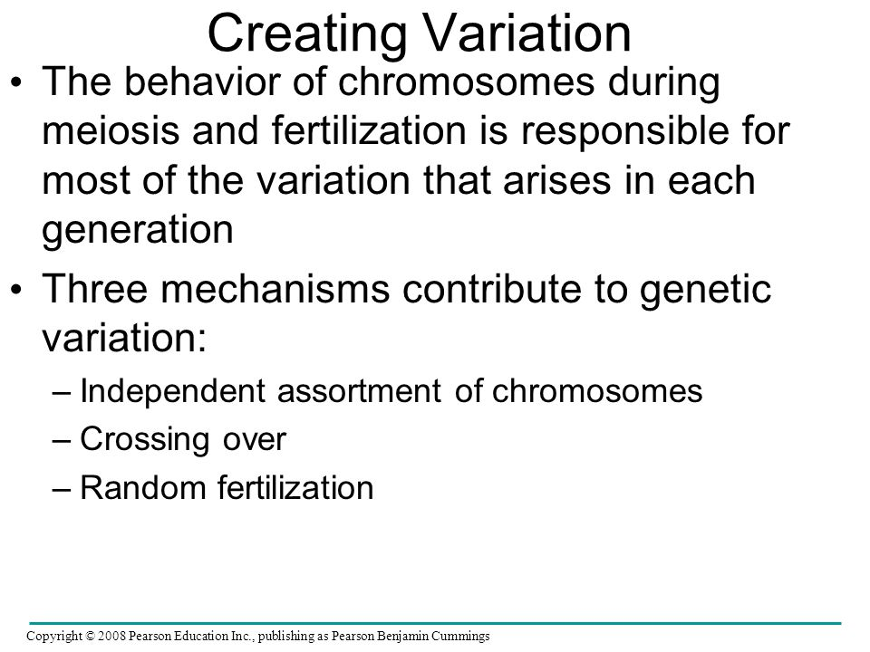 Creating Variation The behavior of chromosomes during meiosis and fertilization is responsible for most of the variation that arises in each generatio