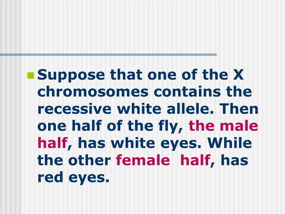 Suppose that one of the X chromosomes contains the recessive white allele.