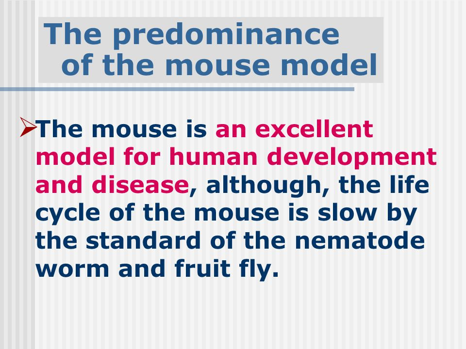  The mouse is an excellent model for human development and disease, although, the life cycle of the mouse is slow by the standard of the nematode worm and fruit fly.