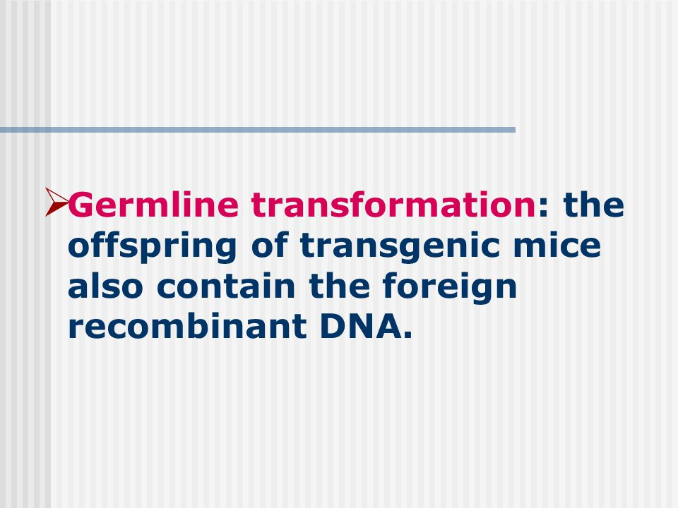  Germline transformation: the offspring of transgenic mice also contain the foreign recombinant DNA.