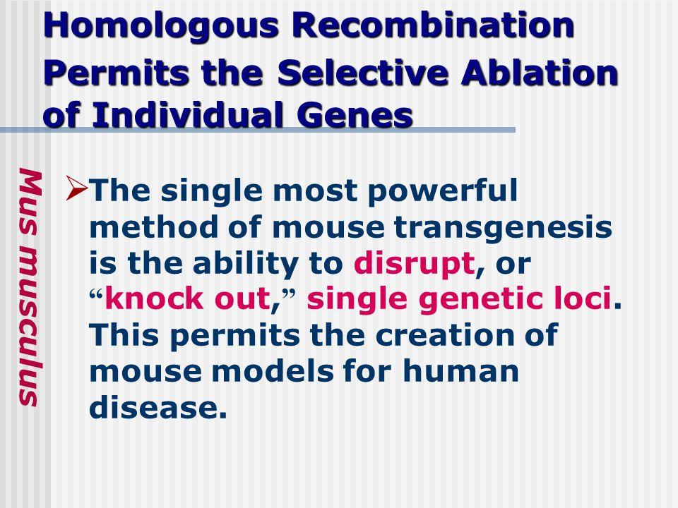 Homologous Recombination Permits theSelective Ablation of Individual Genes Homologous Recombination Permits the Selective Ablation of Individual Genes
