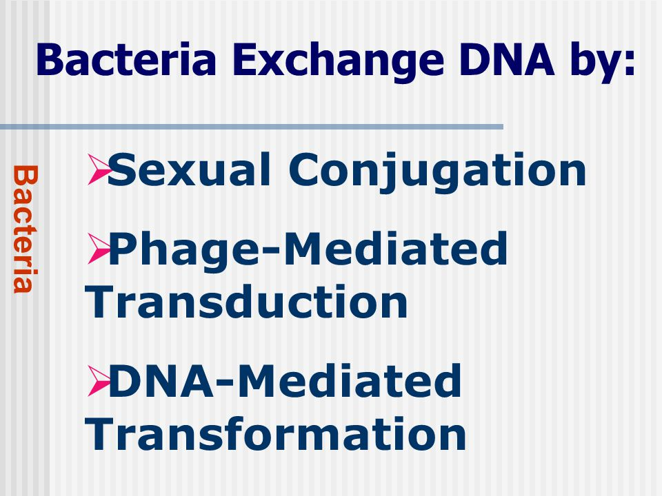 Bacteria Exchange DNA by: Bacteria  Sexual Conjugation  Phage-Mediated Transduction  DNA-Mediated Transformation