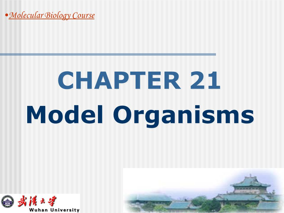 Model 6: THE HOUSE MOUSE, Mus musculus CHAPTER 15 The Genetic Code 4/22/05