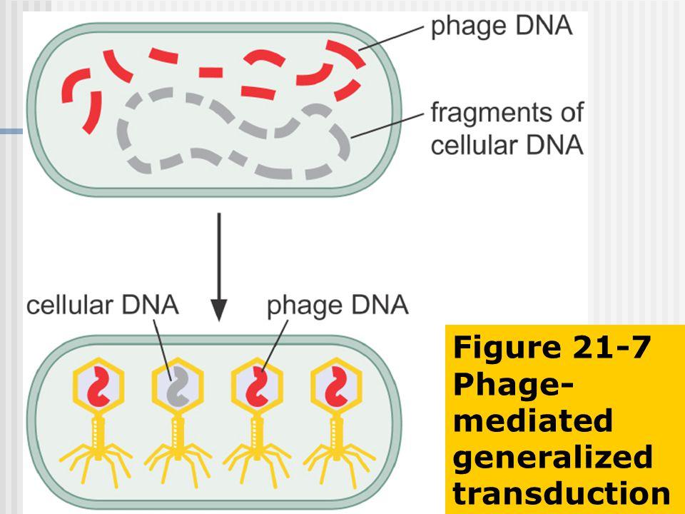 Figure 21-7 Phage- mediated generalized transduction
