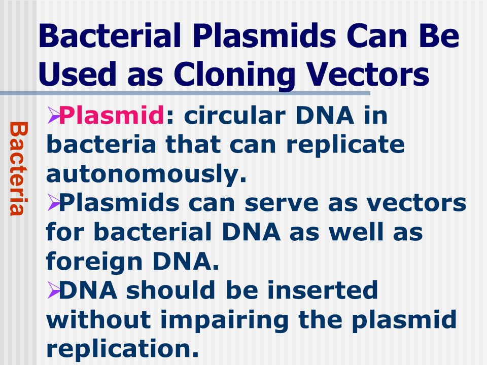 Bacterial Plasmids Can Be Used as Cloning Vectors Bacteria  Plasmid: circular DNA in bacteria that can replicate autonomously.