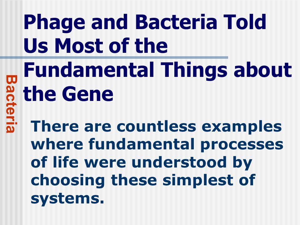 Phage and Bacteria Told Us Most of the Fundamental Things about the Gene Bacteria There are countless examples where fundamental processes of life were understood by choosing these simplest of systems.