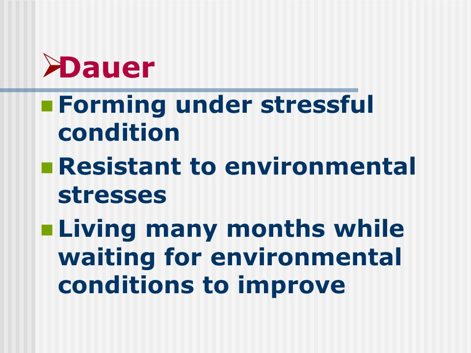  Dauer Forming under stressful condition Resistant to environmental stresses Living many months while waiting for environmental conditions to improve
