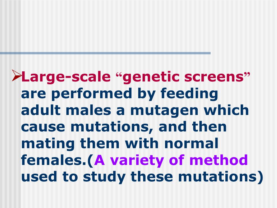  Large-scale genetic screens are performed by feeding adult males a mutagen which cause mutations, and then mating them with normal females.(A variety of method used to study these mutations)