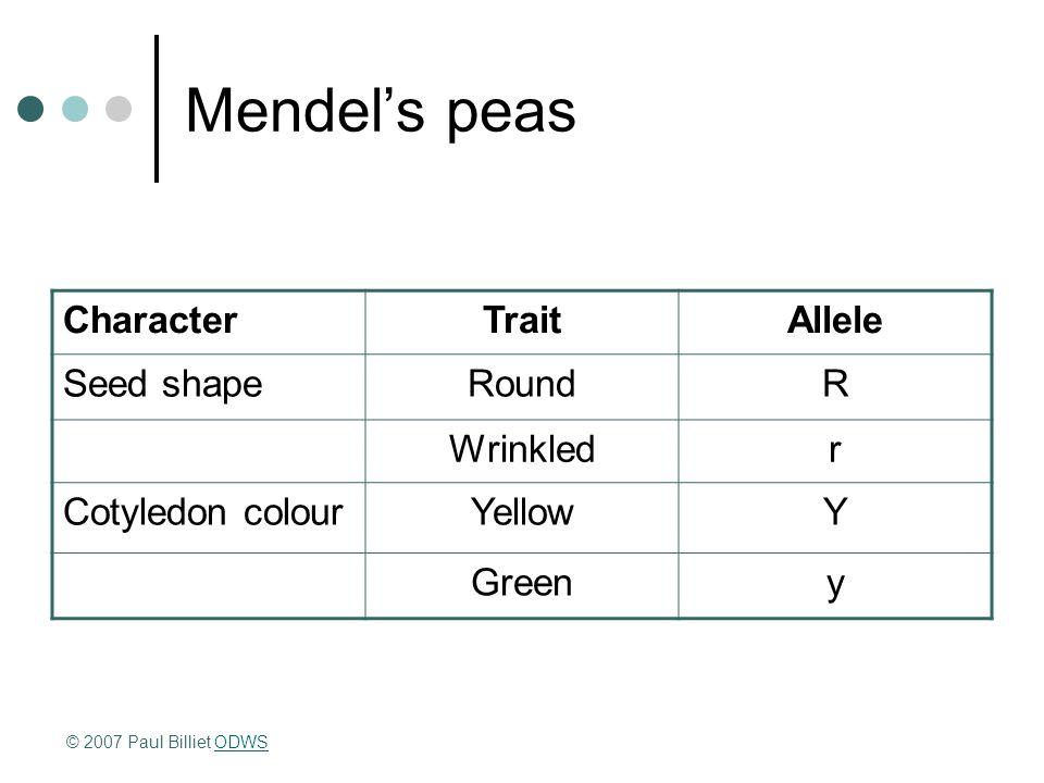 Mendel's peas CharacterTraitAllele Seed shapeRoundR Wrinkledr Cotyledon colourYellowY Greeny © 2007 Paul Billiet ODWSODWS