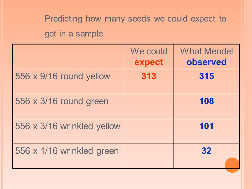 Predicting how many seeds we could expect to get in a sample We could expect What Mendel observed 556 x 9/16 round yellow313315 556 x 3/16 round green108 556 x 3/16 wrinkled yellow101 556 x 1/16 wrinkled green32