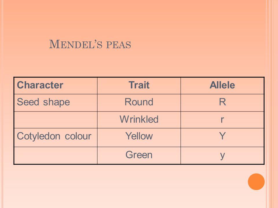 M ENDEL ' S PEAS CharacterTraitAllele Seed shapeRoundR Wrinkledr Cotyledon colourYellowY Greeny