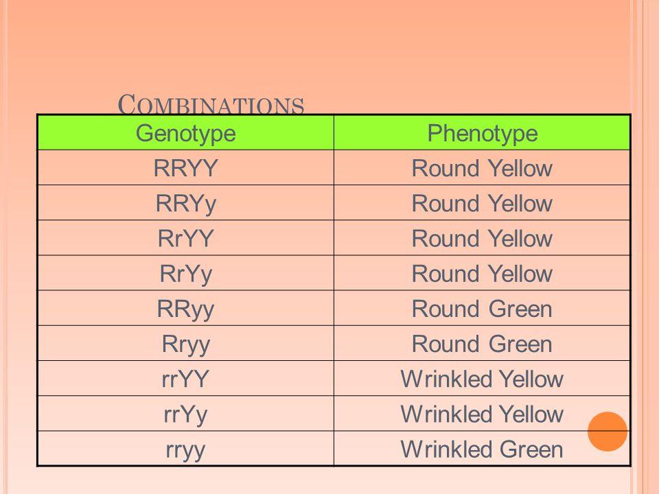 C OMBINATIONS GenotypePhenotype RRYYRound Yellow RRYyRound Yellow RrYYRound Yellow RrYyRound Yellow RRyyRound Green RryyRound Green rrYYWrinkled Yellow rrYyWrinkled Yellow rryyWrinkled Green