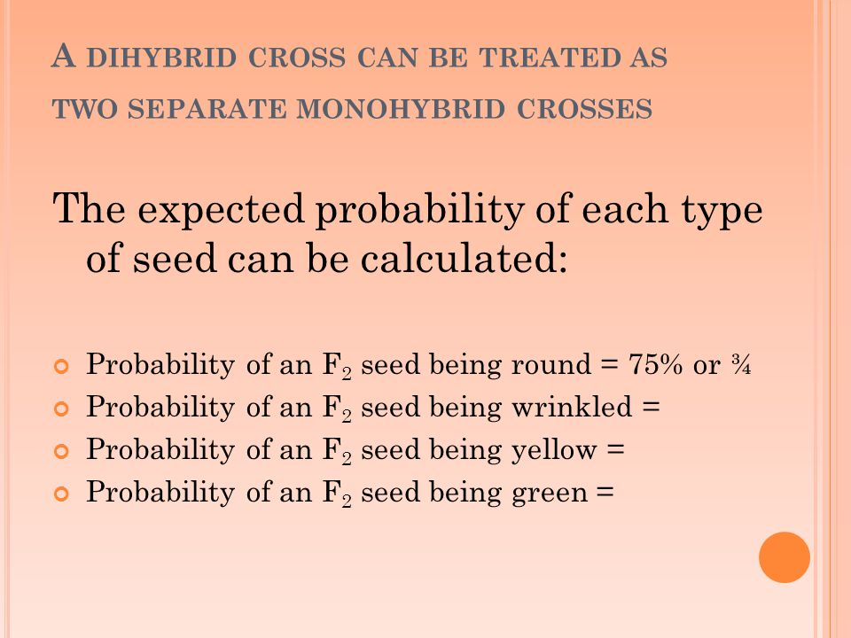 A DIHYBRID CROSS CAN BE TREATED AS TWO SEPARATE MONOHYBRID CROSSES The expected probability of each type of seed can be calculated: Probability of an F 2 seed being round = 75% or ¾ Probability of an F 2 seed being wrinkled = Probability of an F 2 seed being yellow = Probability of an F 2 seed being green =