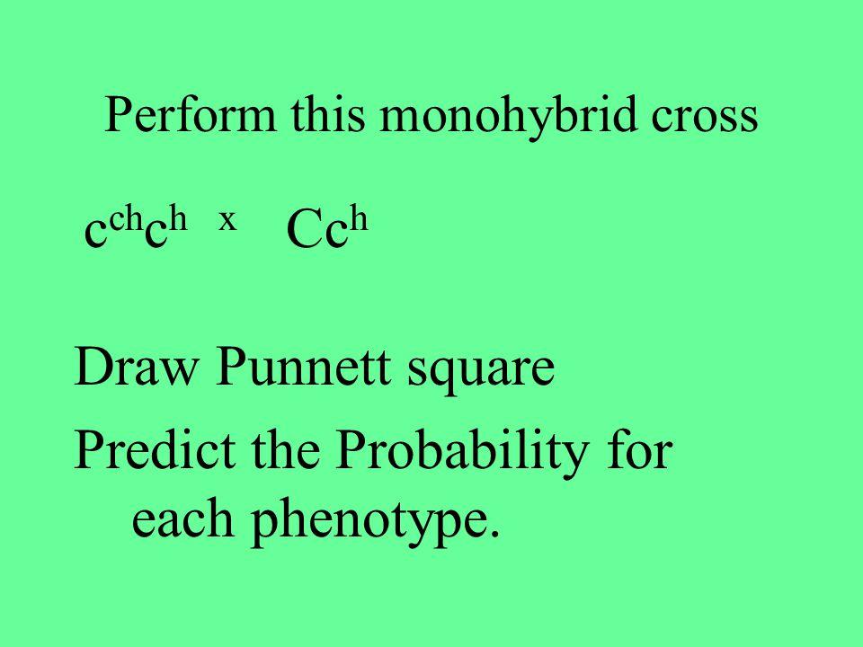 Practice for advanced multiple allele monohybrid cross GenotypePhenotype c ch c h chchchch cc Cc h c ch