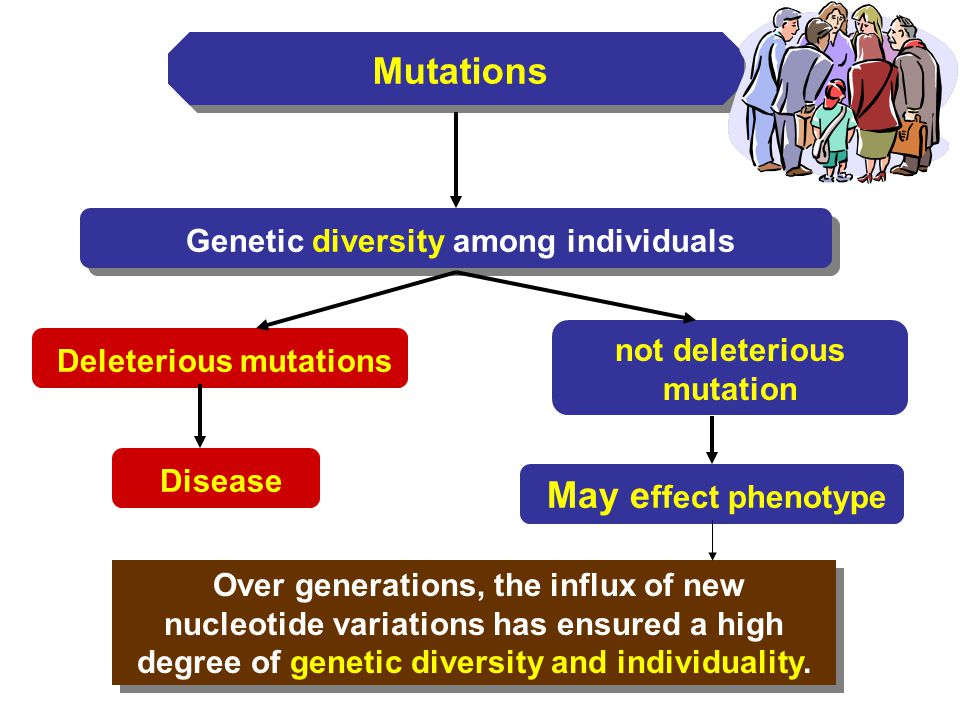 Mutations Genetic diversity among individuals Over generations, the influx of new nucleotide variations has ensured a high degree of genetic diversity
