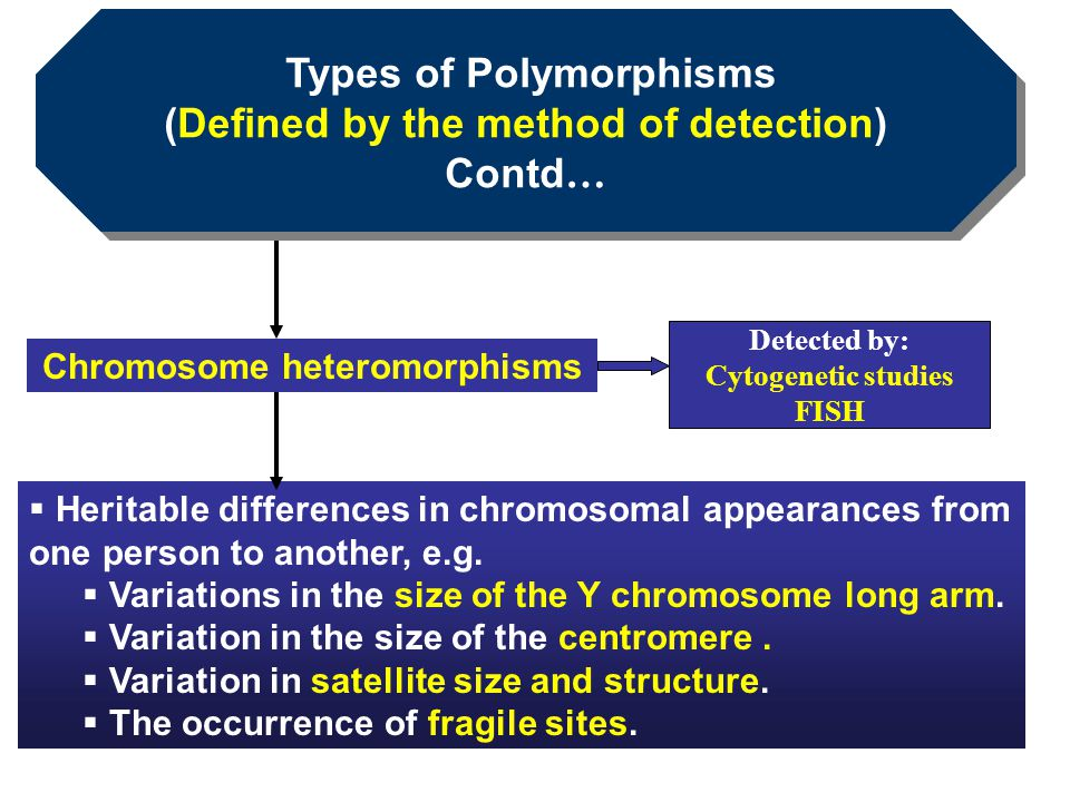 Types of Polymorphisms (Defined by the method of detection) Contd … Types of Polymorphisms (Defined by the method of detection) Contd …  Heritable di