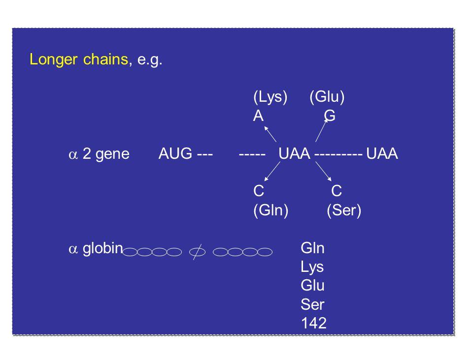 Longer chains, e.g. (Lys) (Glu) A G  2 geneAUG --- ----- UAA --------- UAA C (Gln) (Ser)  globin Gln Lys Glu Ser 142 Longer chains, e.g. (Lys) (Glu)