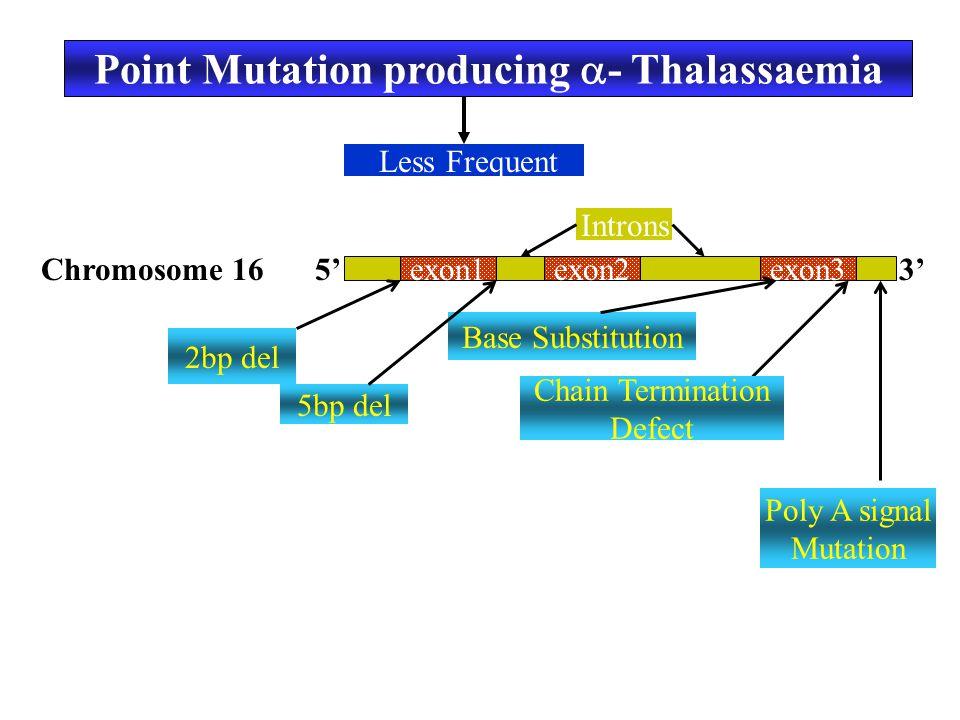 Point Mutation producing  - Thalassaemia Less Frequent exon1exon2exon3 Chromosome 16 Introns 5'3' 2bp del 5bp del Base Substitution Chain Termination