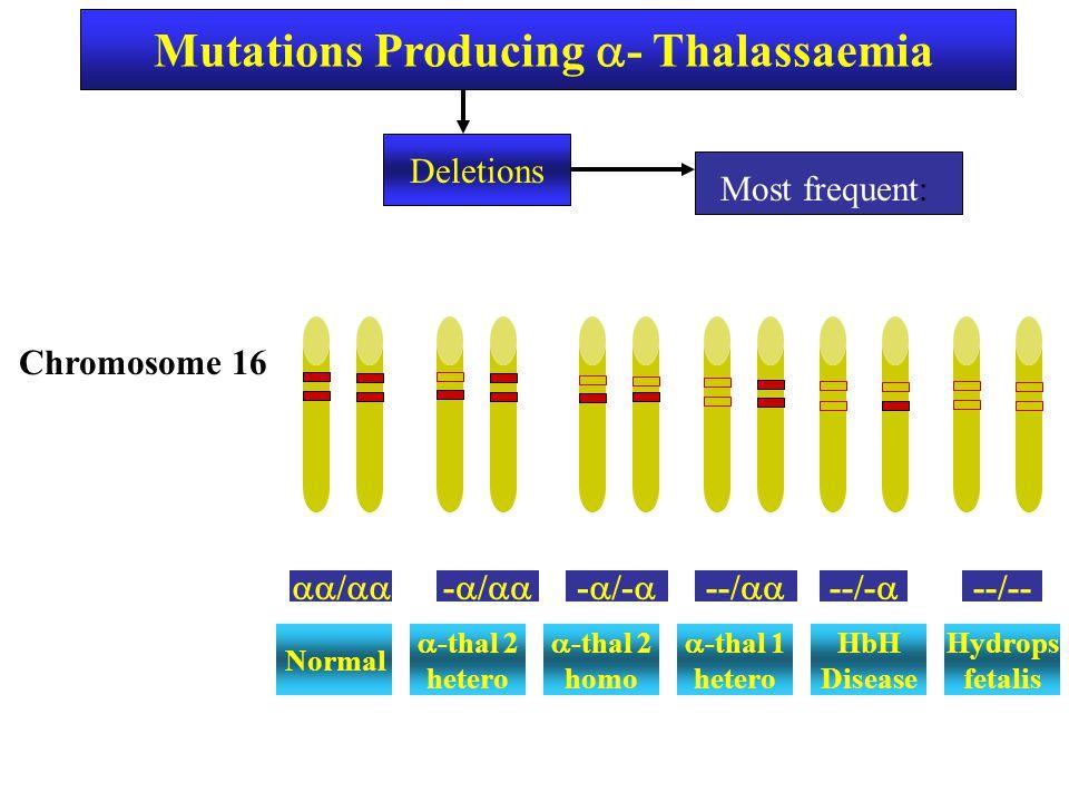 Mutations Producing  - Thalassaemia Deletions Most frequent:  /  -  /-  --/  --/-- --/-  -  /   -thal 2 hetero  -thal 1 hetero HbH Dise
