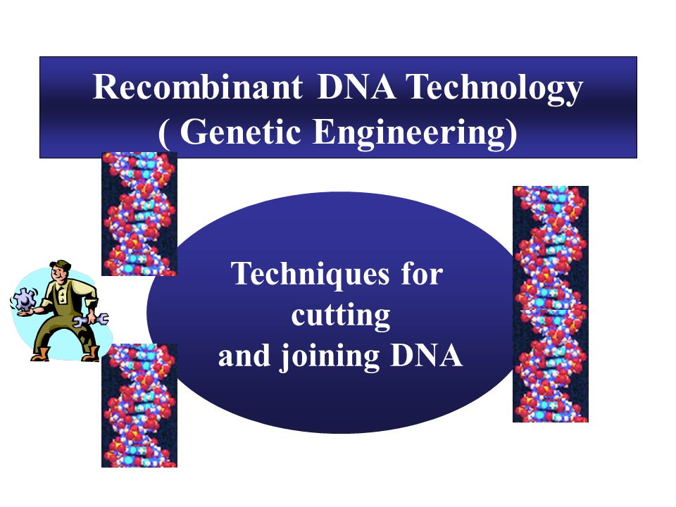 Recombinant DNA Technology ( Genetic Engineering) Techniques for cutting and joining DNA