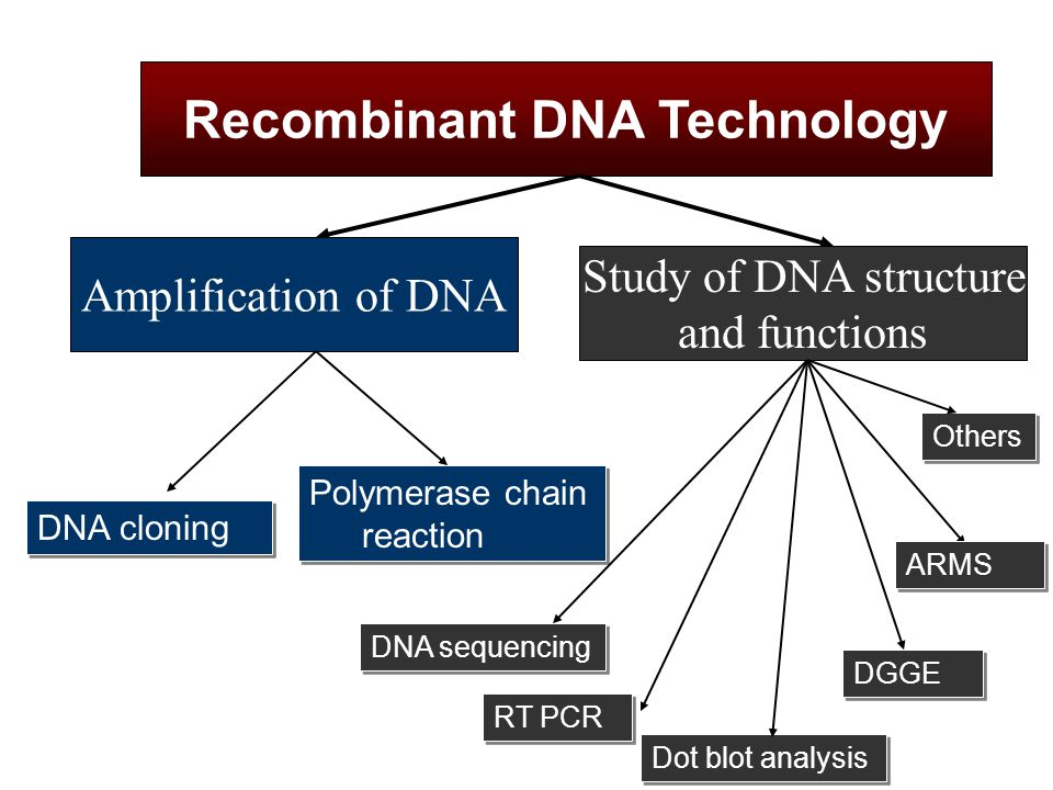 DNA cloning Recombinant DNA Technology Polymerase chain reaction Amplification of DNA Study of DNA structure and functions DGGE RT PCR Dot blot analys