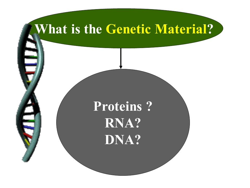 What is the Genetic Material? Proteins ? RNA? DNA?