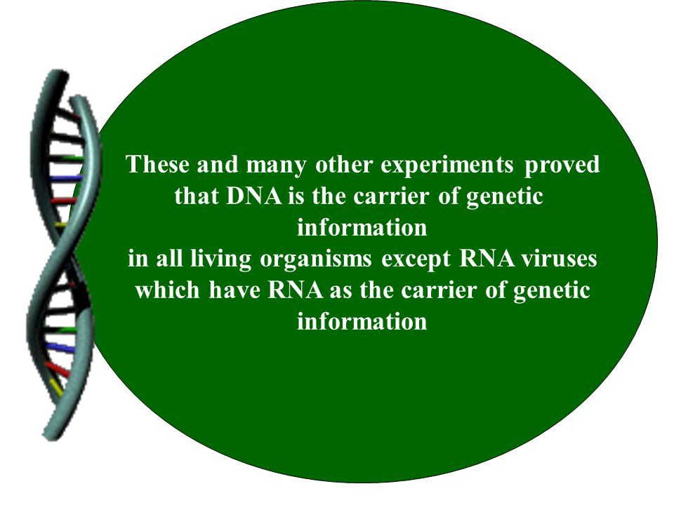These and many other experiments proved that DNA is the carrier of genetic information in all living organisms except RNA viruses which have RNA as th