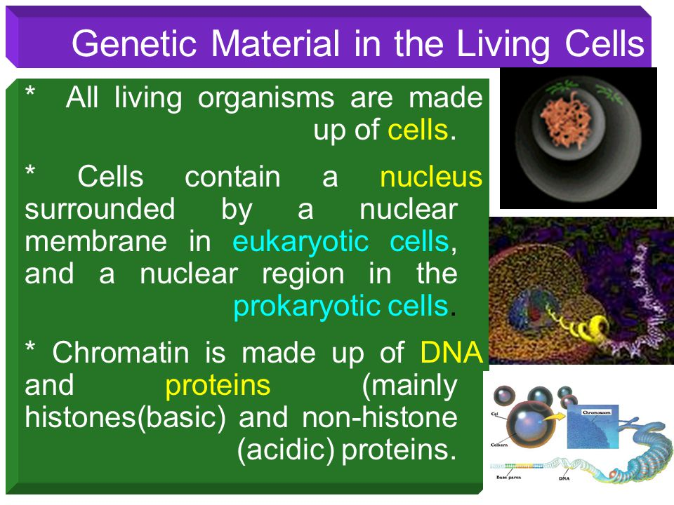 Genetic Material in the Living Cells * All living organisms are made up of cells. * Cells contain a nucleus surrounded by a nuclear membrane in eukary