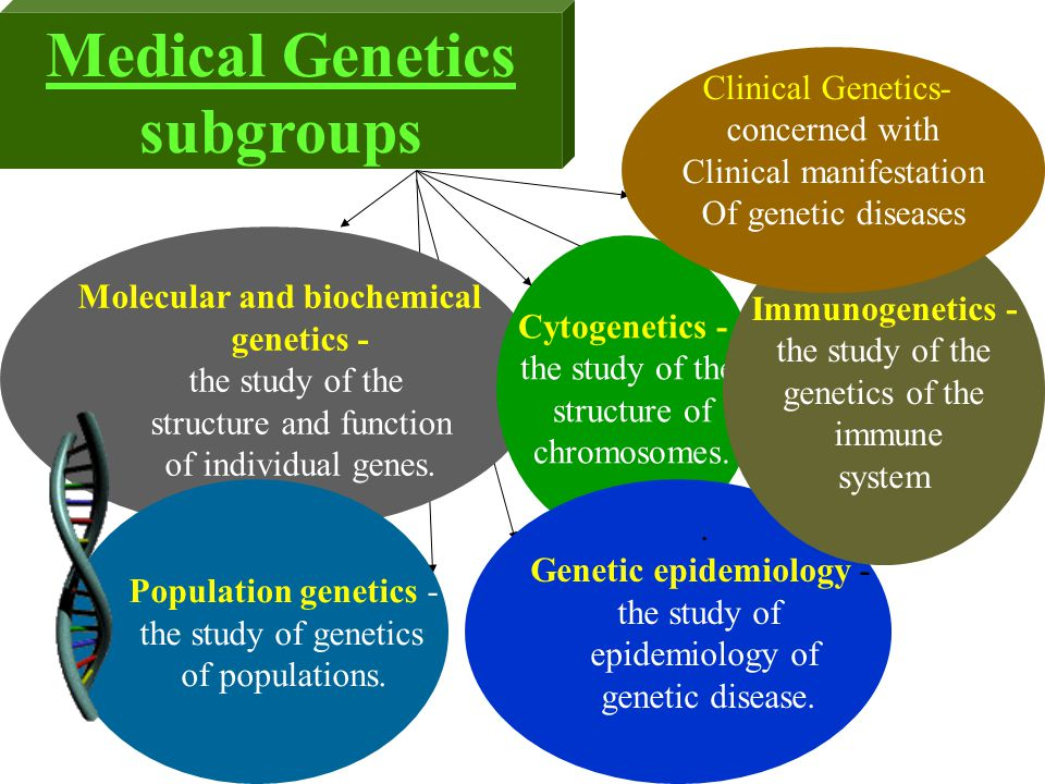 Medical Genetics subgroups Molecular and biochemical genetics - the study of the structure and function of individual genes. Cytogenetics - the study