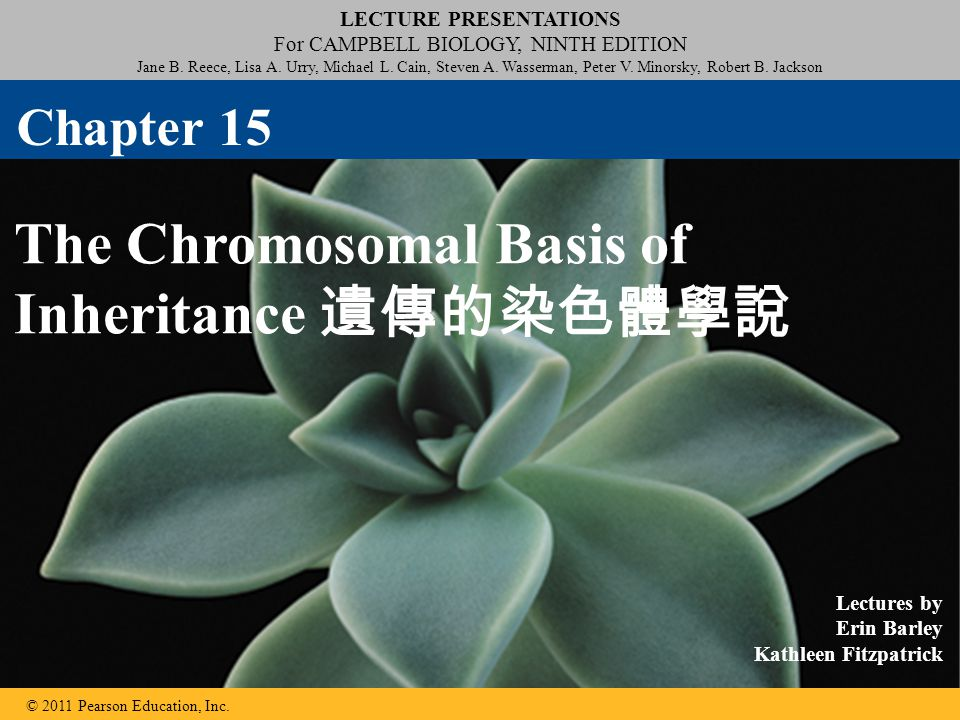 Disorders Caused by Structurally Altered Chromosomes The syndrome cri du chat 貓鳴症候群 ( cry of the cat ), results from a specific deletion in chromosome 5 A child born with this syndrome is mentally retarded and has a catlike cry; individuals usually die in infancy or early childhood © 2011 Pearson Education, Inc.