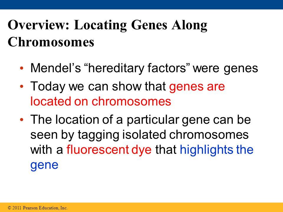 Disorders Caused by Structurally Altered Chromosomes Certain cancers, including chronic myelogenous leukemia (CML) 慢性骨髓 性白血病, are caused by translocations of chromosomes 造血母細胞的一種惡性腫瘤第 9 對染色 體上的一段 ABL 基因與第 22 對染色體上 的一段基因互換位子 ,而使得在第 22 對 染色體上產生一個異常的融合基因 (BCR-ABL) 。 © 2011 Pearson Education, Inc.