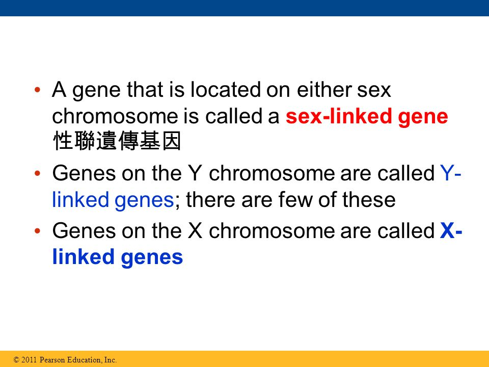 A gene that is located on either sex chromosome is called a sex-linked gene 性聯遺傳基因 Genes on the Y chromosome are called Y- linked genes; there are few of these Genes on the X chromosome are called X- linked genes © 2011 Pearson Education, Inc.