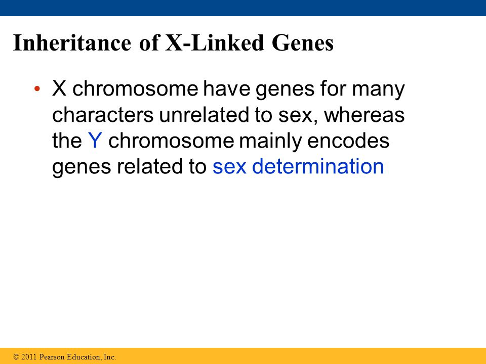Inheritance of X-Linked Genes X chromosome have genes for many characters unrelated to sex, whereas the Y chromosome mainly encodes genes related to sex determination © 2011 Pearson Education, Inc.
