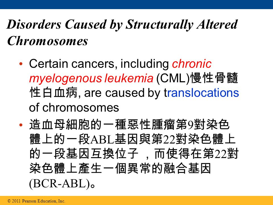 Disorders Caused by Structurally Altered Chromosomes Certain cancers, including chronic myelogenous leukemia (CML) 慢性骨髓 性白血病, are caused by translocations of chromosomes 造血母細胞的一種惡性腫瘤第 9 對染色 體上的一段 ABL 基因與第 22 對染色體上 的一段基因互換位子 ,而使得在第 22 對 染色體上產生一個異常的融合基因 (BCR-ABL) 。 © 2011 Pearson Education, Inc.