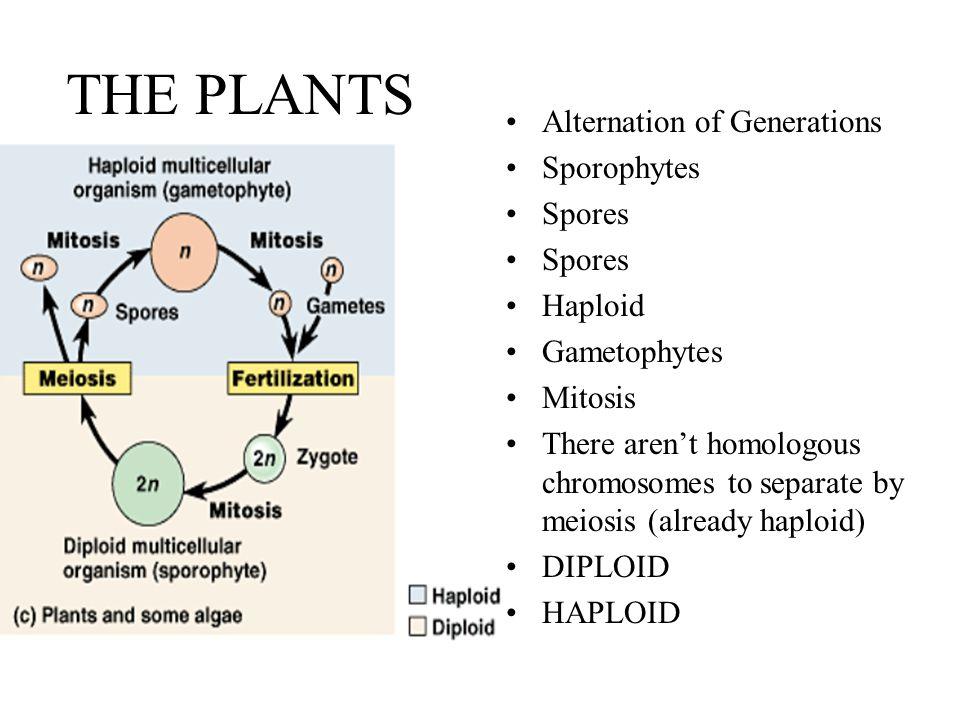 biology mitosis lab