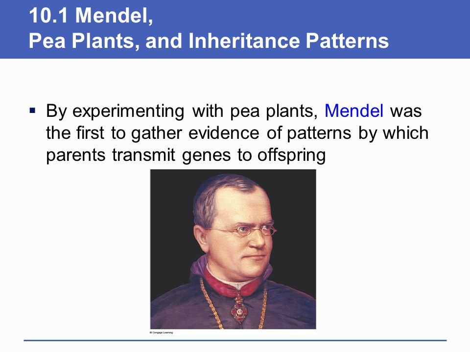 10.1 Mendel, Pea Plants, and Inheritance Patterns  By experimenting with pea plants, Mendel was the first to gather evidence of patterns by which par