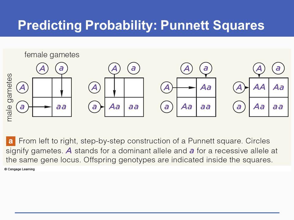 Predicting Probability: Punnett Squares