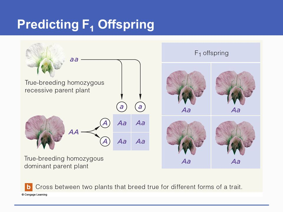 Predicting F 1 Offspring