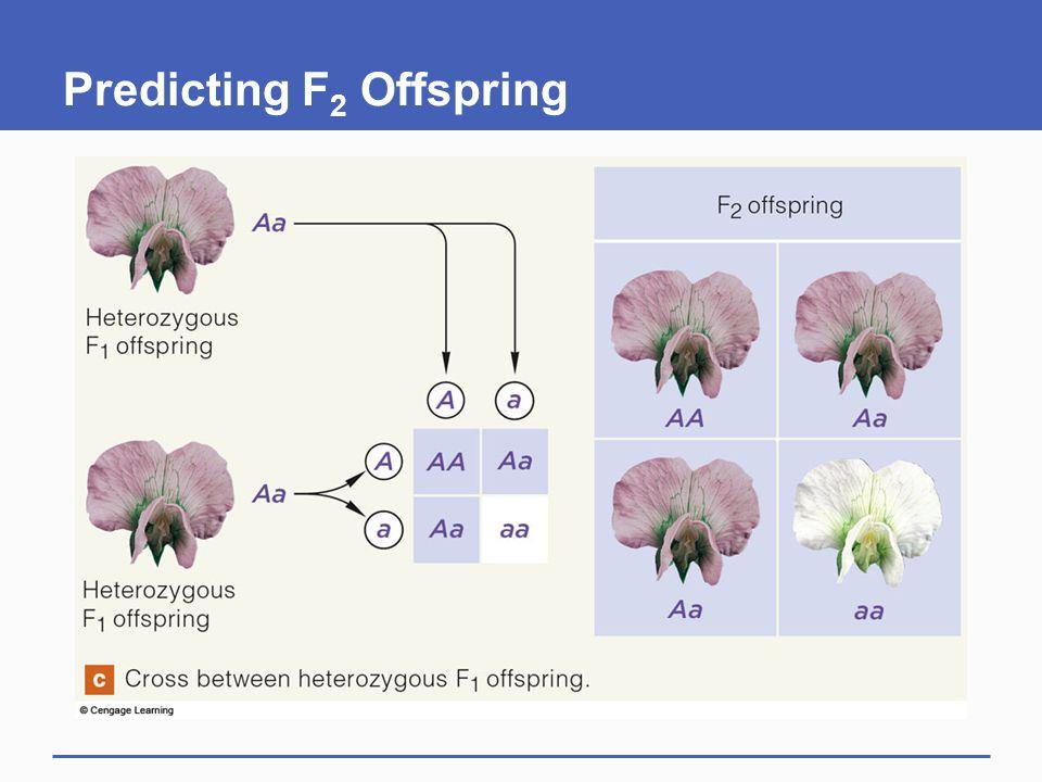 Predicting F 2 Offspring