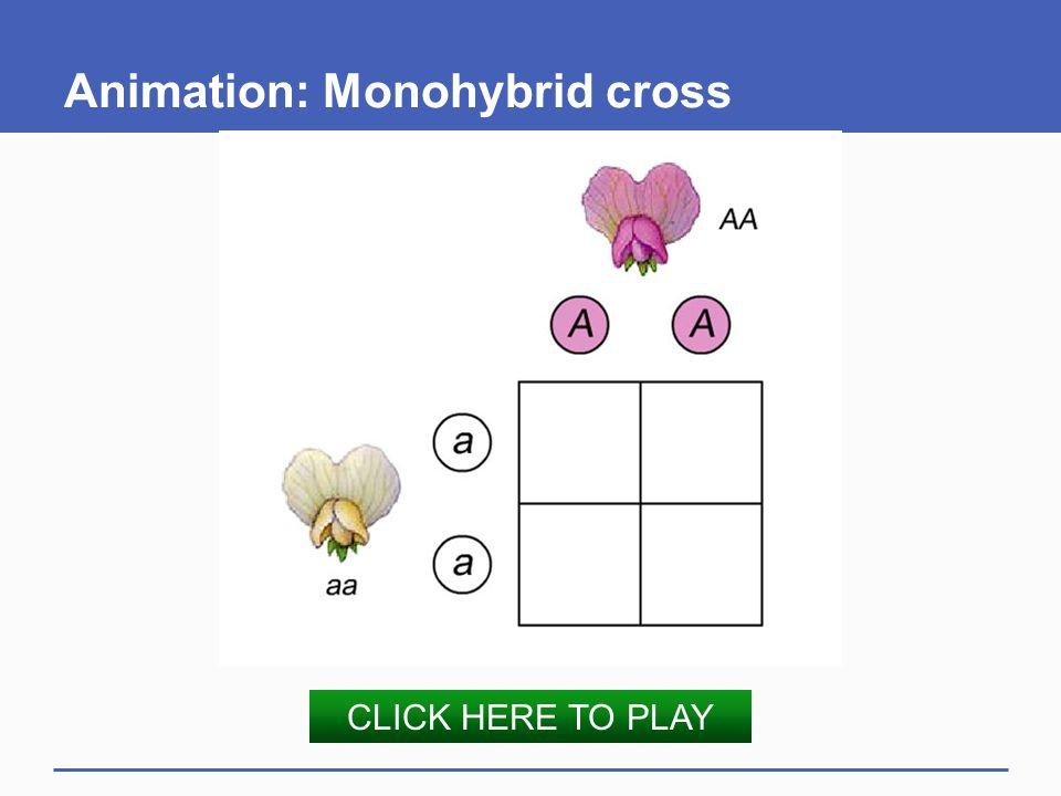 Animation: Monohybrid cross CLICK HERE TO PLAY