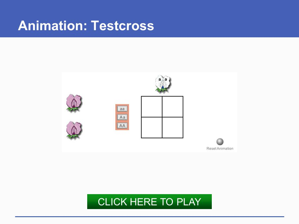 Animation: Testcross CLICK HERE TO PLAY