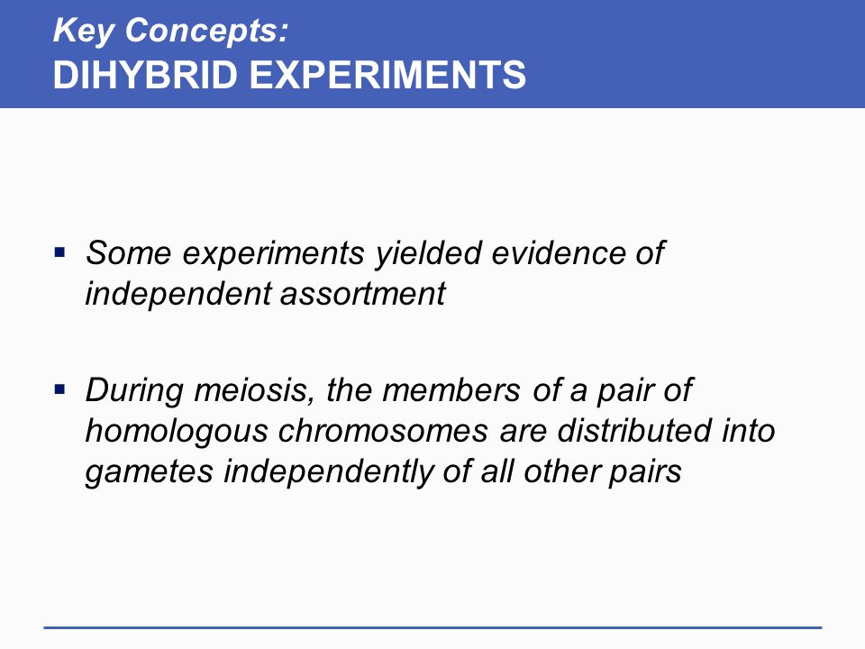 Key Concepts: DIHYBRID EXPERIMENTS  Some experiments yielded evidence of independent assortment  During meiosis, the members of a pair of homologous