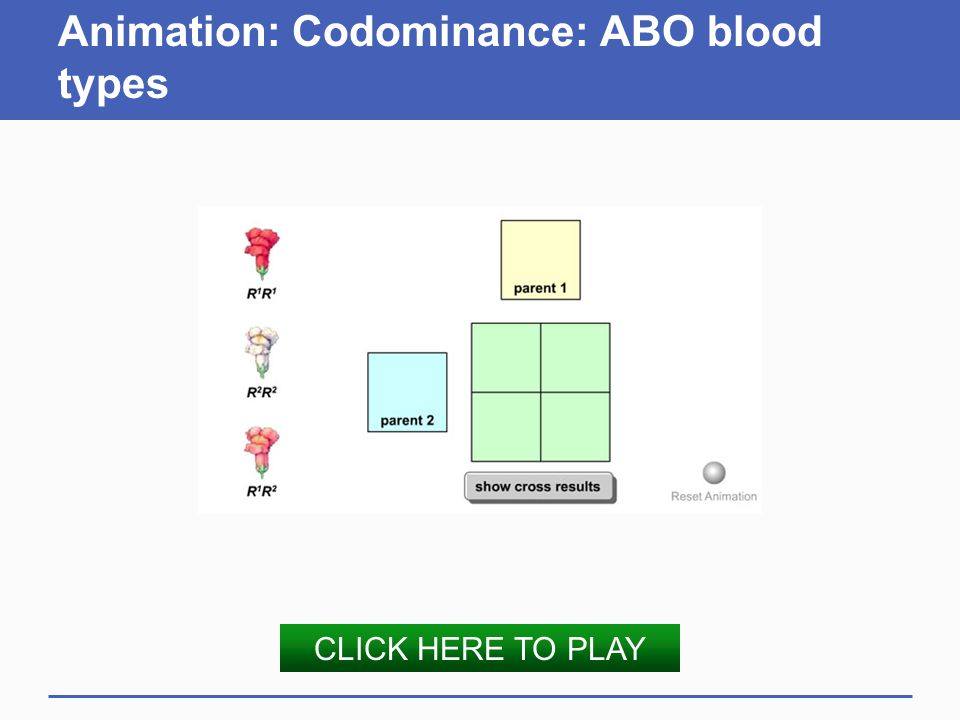 Animation: Codominance: ABO blood types CLICK HERE TO PLAY