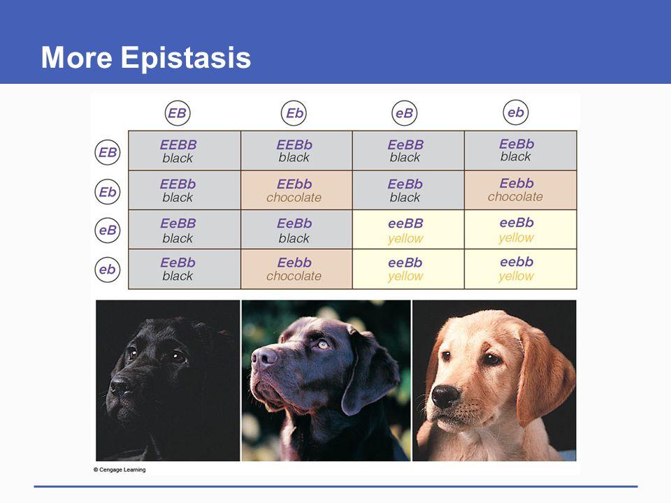 More Epistasis