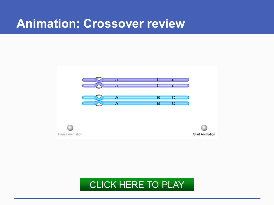 Animation: Crossover review CLICK HERE TO PLAY